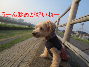 Img_4313_800x600