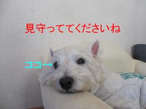 Img_8025_800x600