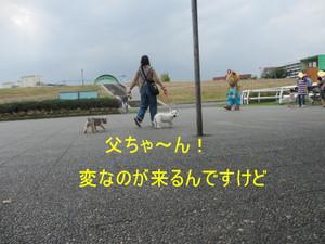 Img_7319_800x600